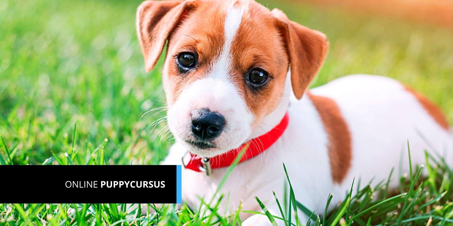 Online Puppycursus